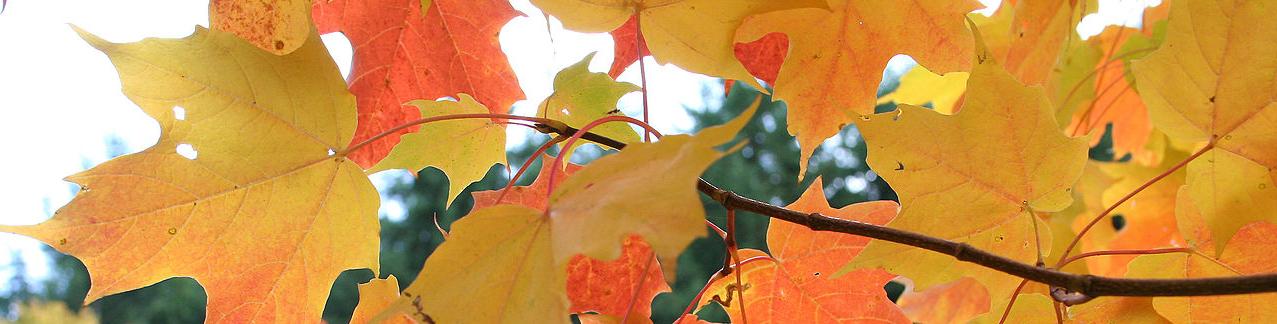pict_autumn